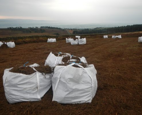 Double chopped bagged heather brash for heather moorland peatland restoration projects, cut and bagged by specialist environmental contractor Conservefor
