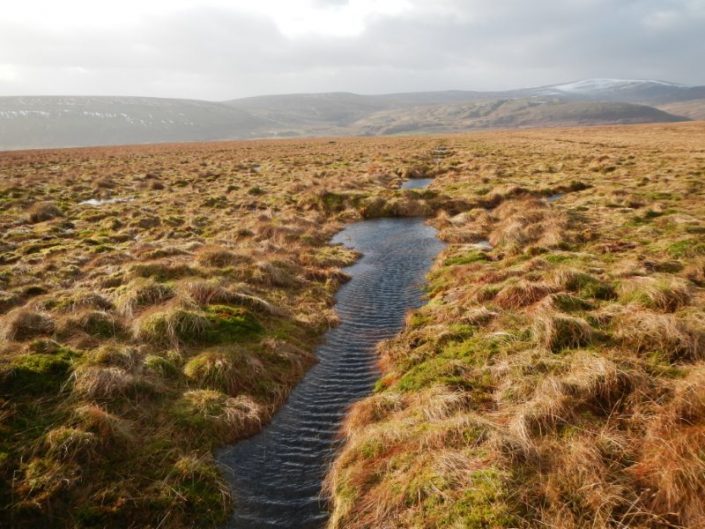 specialist peatland restoration contractor